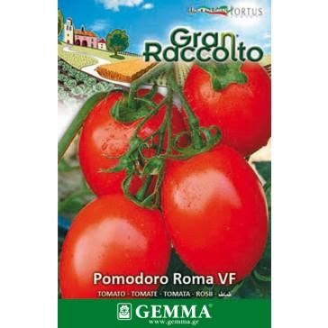 Τοματάκι roma, σπόρος
