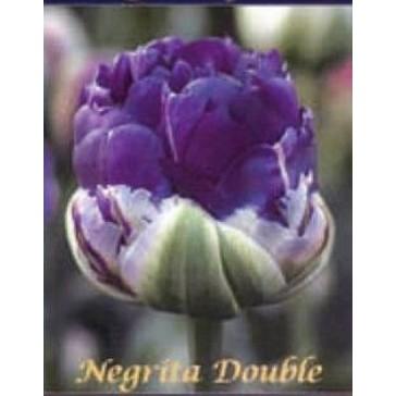 """Τουλίπα """"Negrita Double"""""""