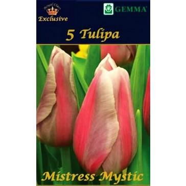 """Τουλίπα """"Mistress Mystic"""""""