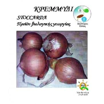 Κρεμμύδι Stoccarda, Βιολογικός σπόρος