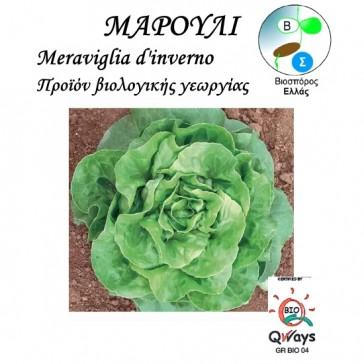 Μαρούλι Meraviglia d'inverno, βιολογικοί σπόροι