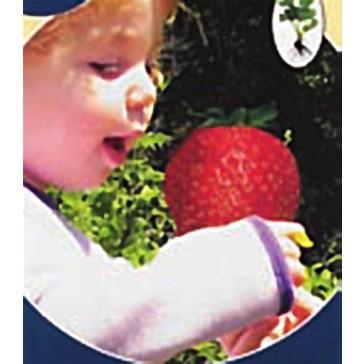 Φράουλα Γίγας