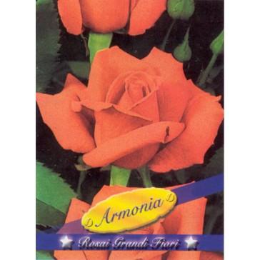 Τριανταφυλλιά θαμνώδης Armonia