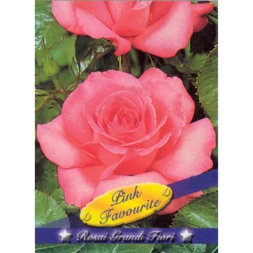 Τριανταφυλλιά θαμνώδης Pink Favourite