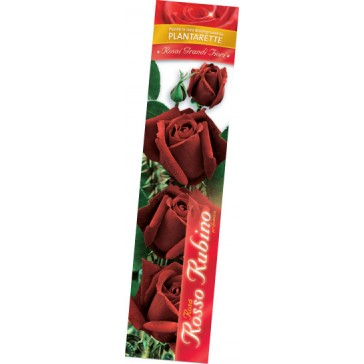 Τριανταφυλλιά θαμνώδης Rosso Rubino
