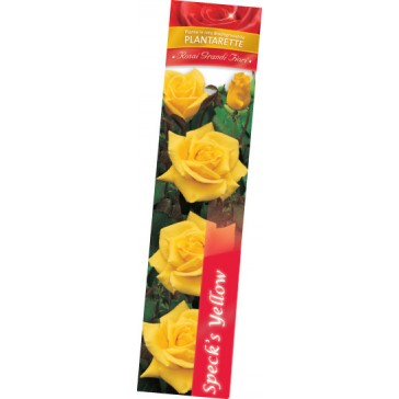 Τριανταφυλλιά θαμνώδης Speck's Yellow