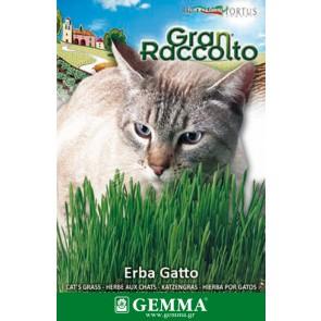 Χόρτο για γάτες, σπόρος