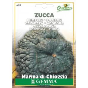 Κολοκύθα Marina di Chioggia, σπόρος