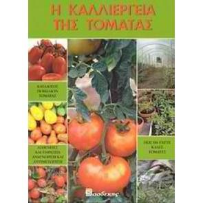 Η καλλιέργεια της τομάτας