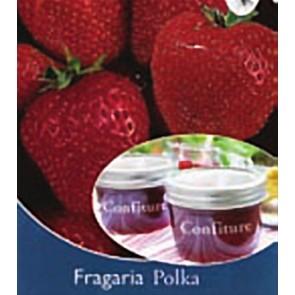 Φράουλα Polka